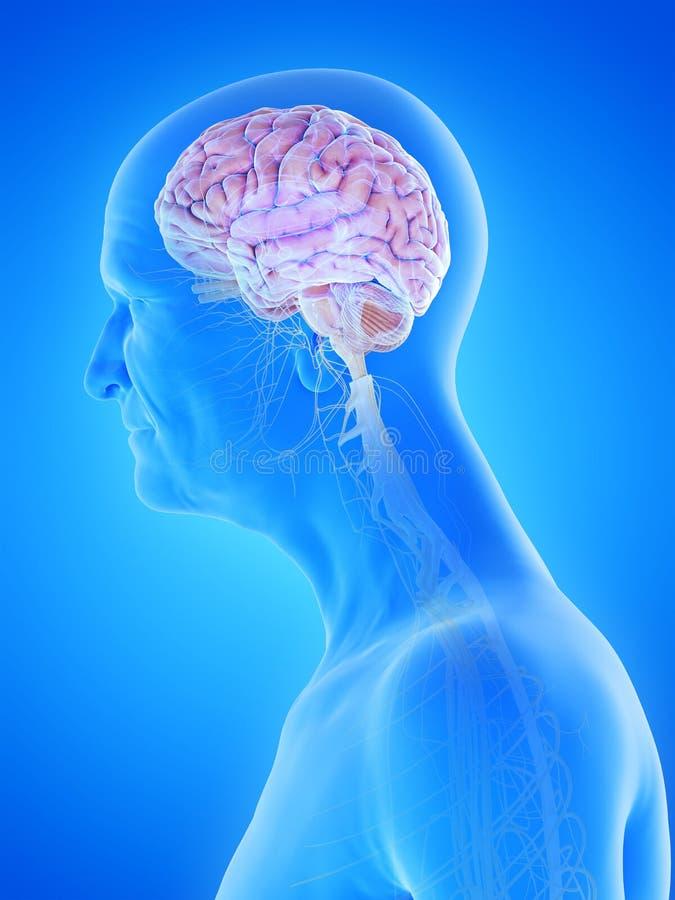 Oud bemant hersenen en zenuwen stock illustratie
