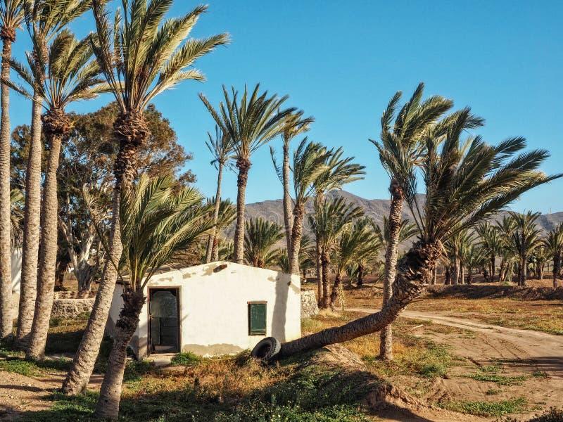 Oud Canarisch huis binnen - tussen palmen royalty-vrije stock foto