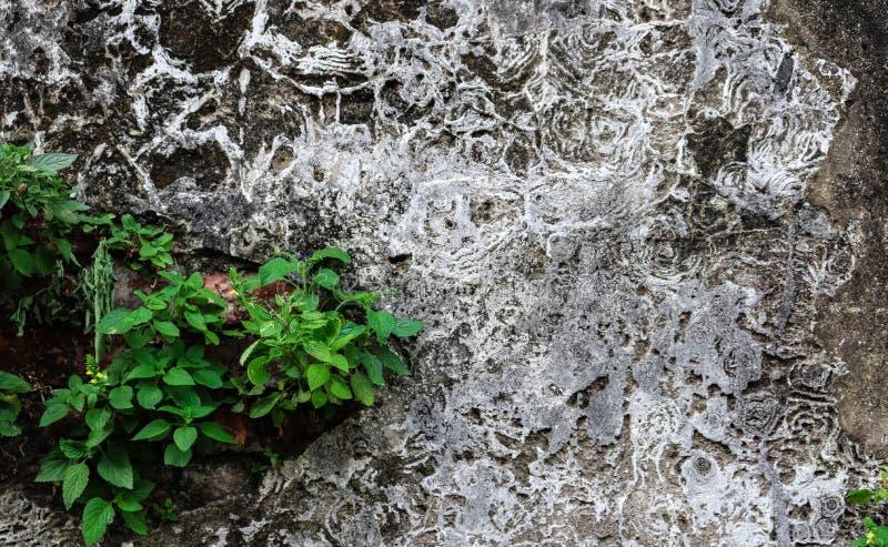 Oud Cement droog met van het achtergrond boomgebruik textuur royalty-vrije stock foto
