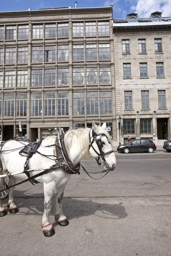 Oud De Cabinepaard Van Montreal Hansome Stock Foto