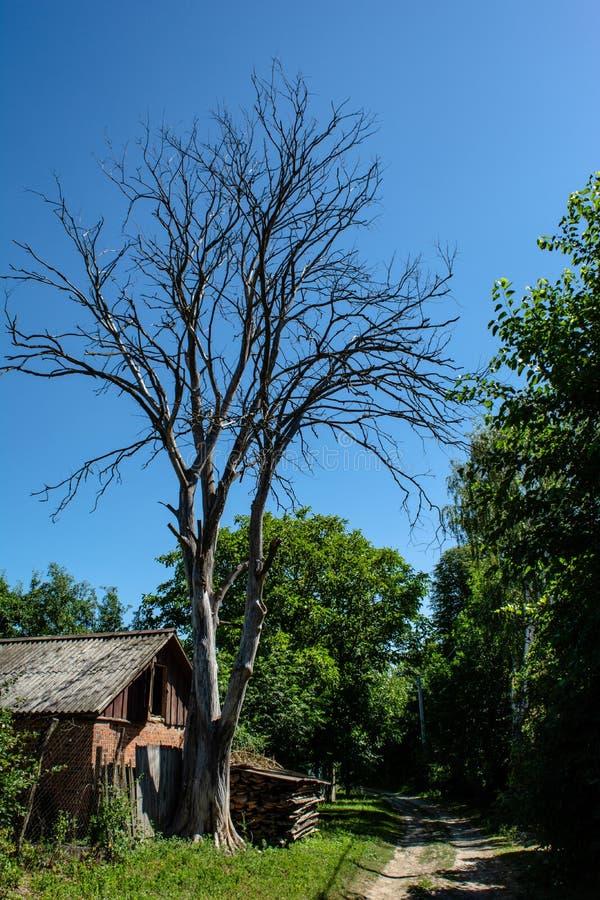 Oud depot dichtbij de droge dode die boom in het dorp wordt gevestigd stock foto