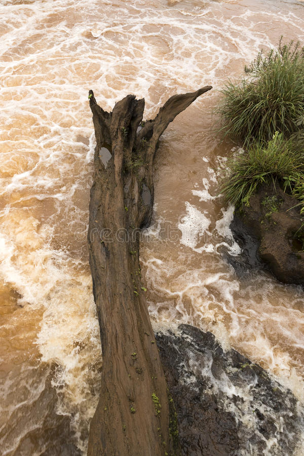 Oud die boomlogboek in de rotsen van een rivier wordt geplakt stock foto