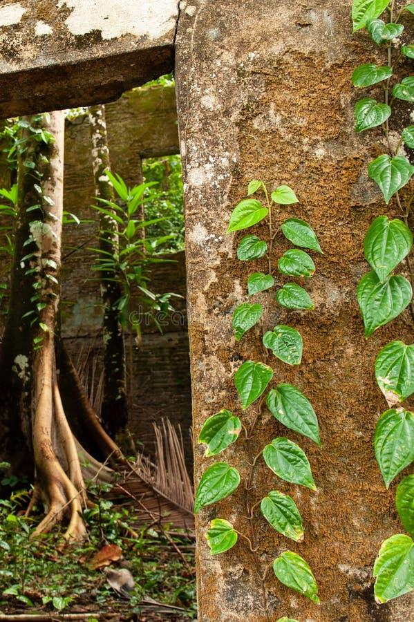 Oud die huis met groene klimop en tropische installatie, mos, l wordt behandeld royalty-vrije stock afbeeldingen