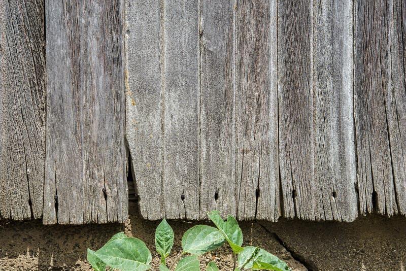 Oud doorstaan schuurhout, spijkers, royalty-vrije stock foto