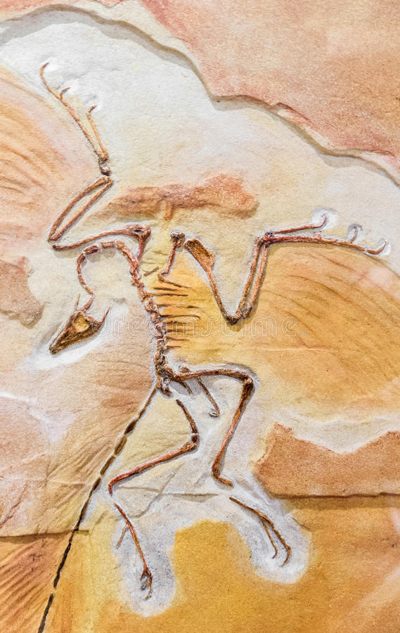Oud fossiel - archeopteryx royalty-vrije stock foto