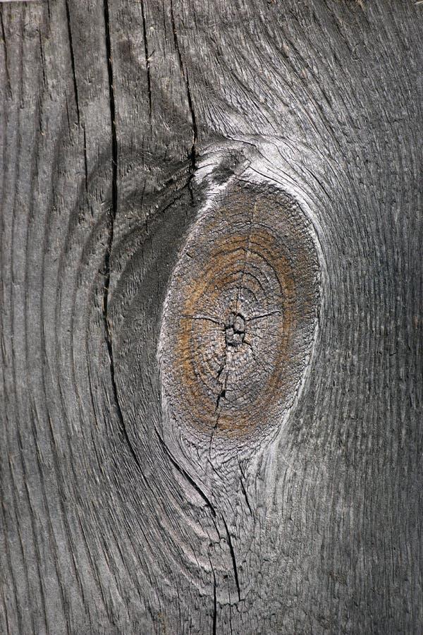 Oud geknoopt hout royalty-vrije stock foto