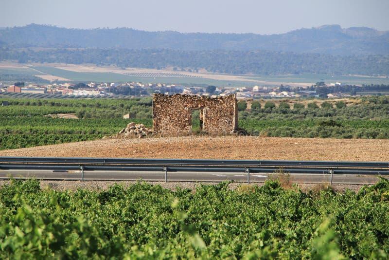 Oud geruïneerd die steenhuis door wijngaarden wordt omringd royalty-vrije stock afbeelding