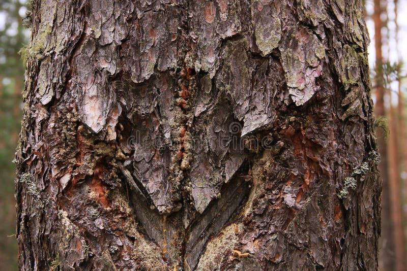 Oud hout met sporen van besnoeiingen die door mensen worden gemaakt stock fotografie