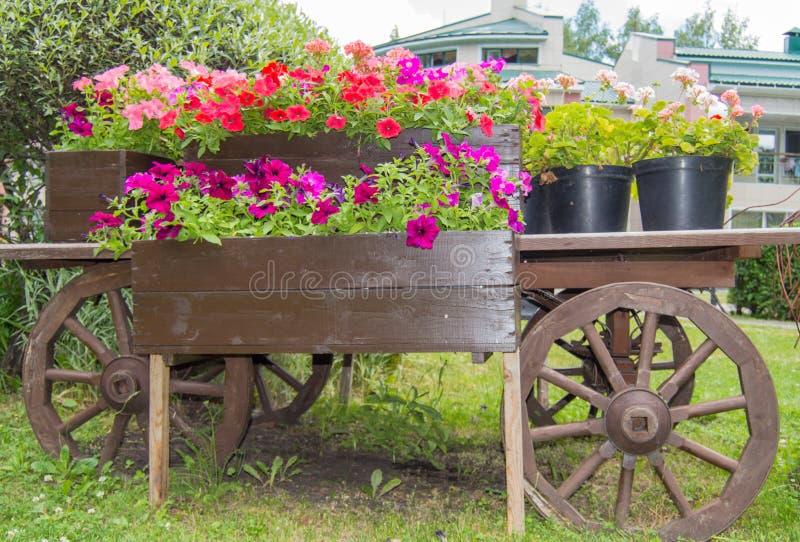 Oud houten uitstekend karretje met bloempotten en dozen met kleurrijke Petuniabloemen en geraniums in de tuin op de Zonnige zomer royalty-vrije stock afbeeldingen