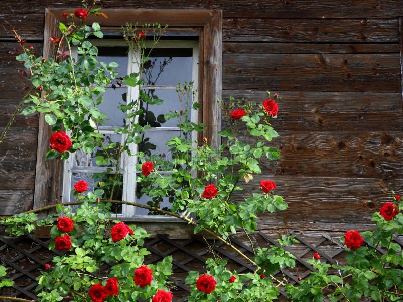 Oud huis dat door rode rozen wordt ineengestrengeld stock foto's
