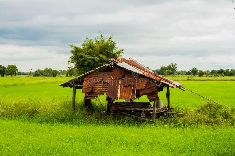 Oud huis in padieveld stock foto
