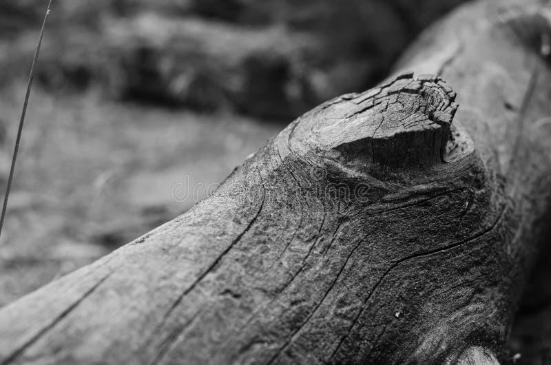 Oud Logboek De structuur van een boom zonder schors Zwart-wit achtergrond royalty-vrije stock foto's