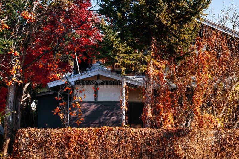 Oud lokaal Japans huis met kleurrijke de herfstboom en dadelpruimboom stock foto's