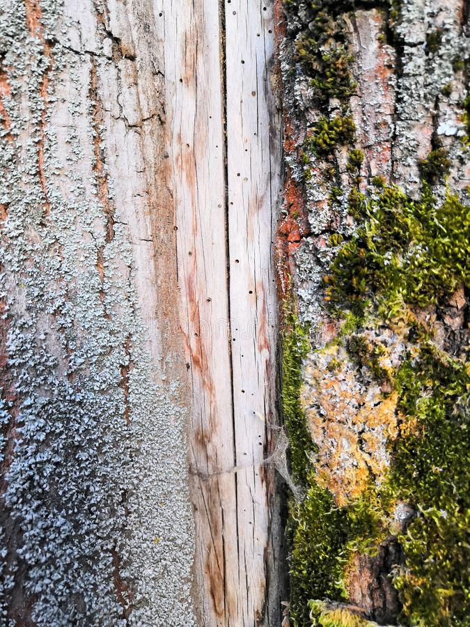 oud mooi structureel bruin grijs en groen mos royalty-vrije stock afbeelding