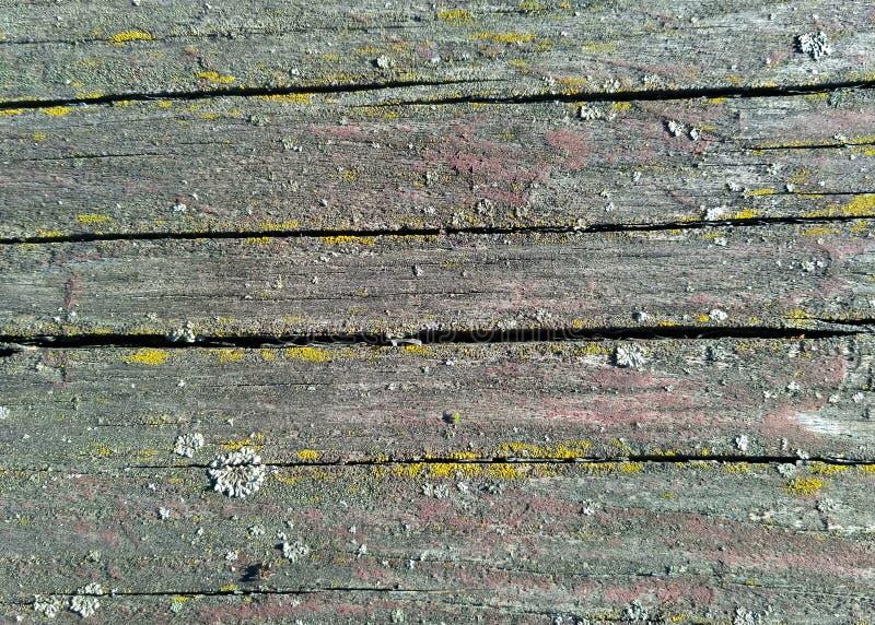 oud natuurlijk patroonhout met mos oude houten geweven oppervlakteachtergrond stock fotografie