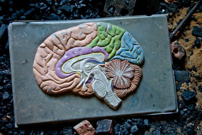 Oud plastic model van menselijke hersenen in verlaten school royalty-vrije stock afbeeldingen