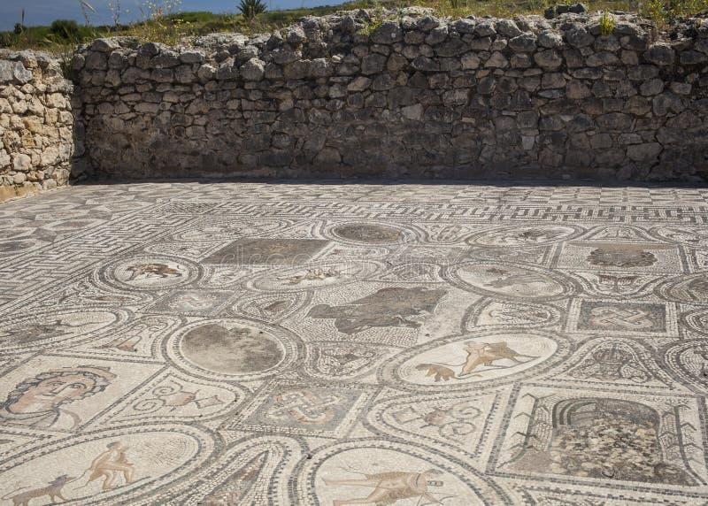 Oud Roman mozaïek van Hercules in Volubilis stock afbeelding