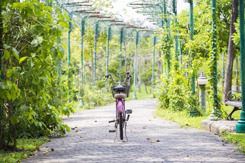 Oud roze fietsparkeren in park op weg met selectieve nadruk royalty-vrije stock afbeeldingen