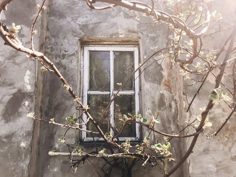 Oud rustiek houten venster op concrete muur van oud huis in zonnige botanische tuin met takken en verse nieuwe groene bladeren te royalty-vrije stock foto's