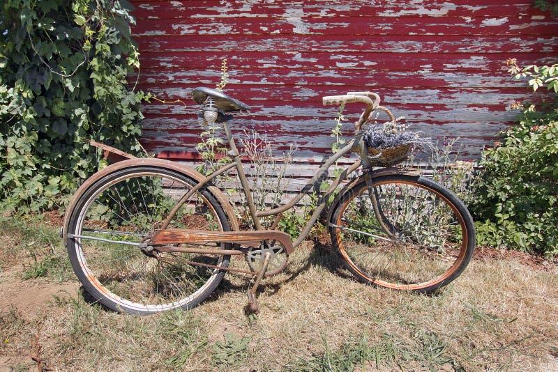 Oud Rusty Bicycle met Mand van Lavendelbloemen stock afbeeldingen
