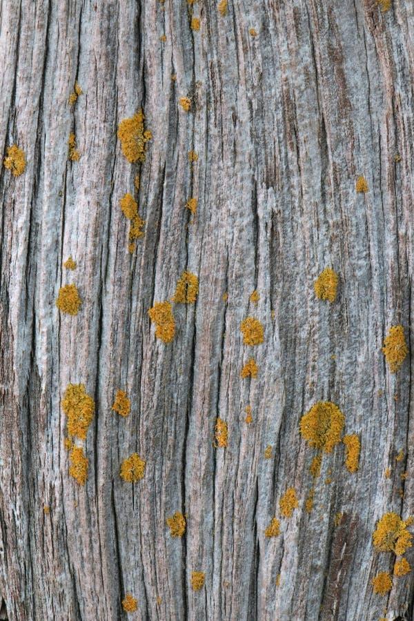 Oud schuurhout met Korstmossen stock afbeelding
