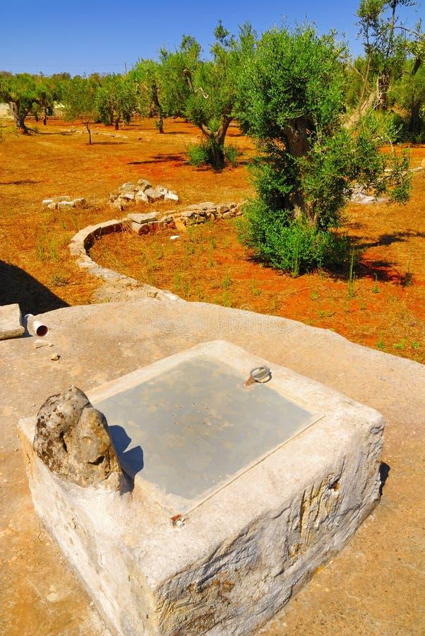 Oud steenreservoir met oude olijfbomen, Salento, Apulia-gebied, Zuid-Italië stock foto's