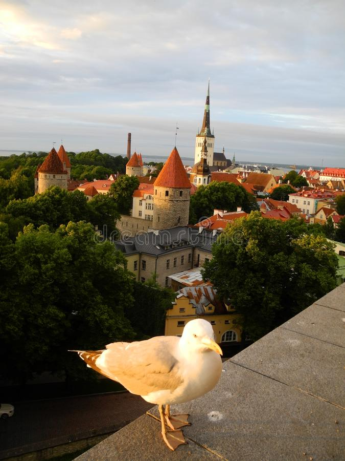 Oud Tallinn, Estland stock afbeelding