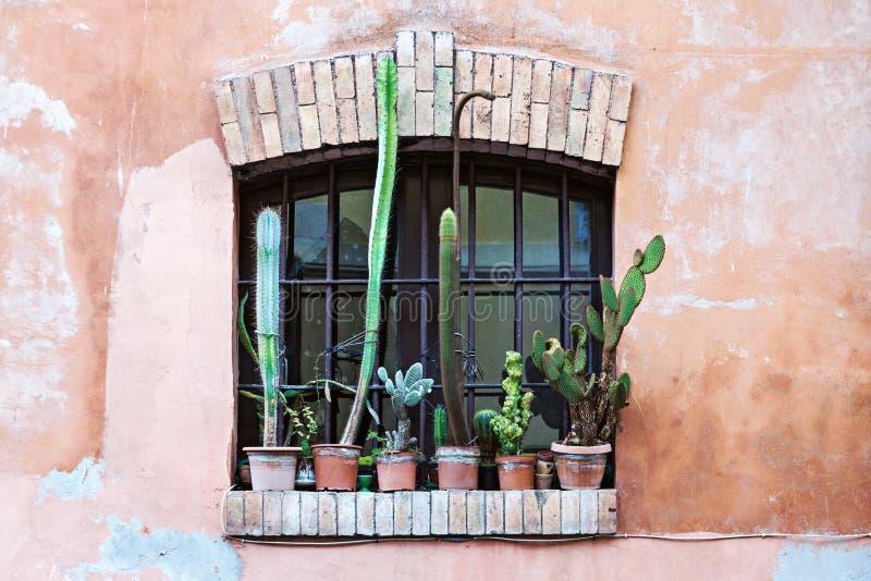 Oud venster met groep de potten van de cactusbloem stock afbeelding