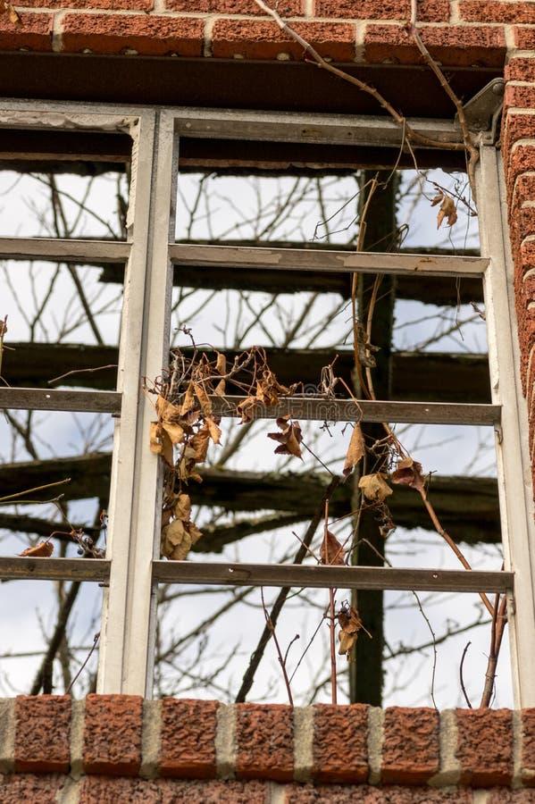 Oud venster met wijnstokken die uit het voortkomen royalty-vrije stock afbeelding