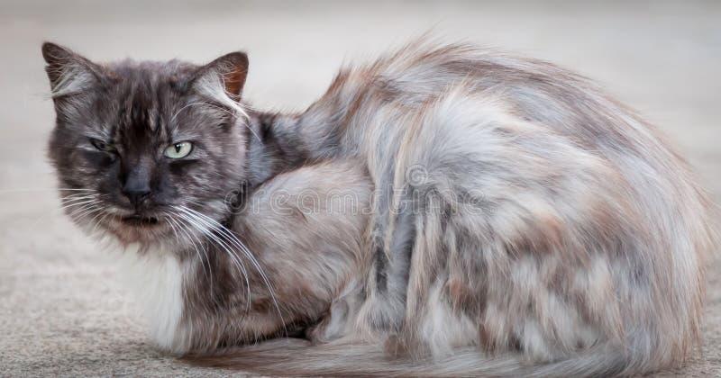 Oud Verdwaald Tomcat die Sjofel kijken royalty-vrije stock fotografie