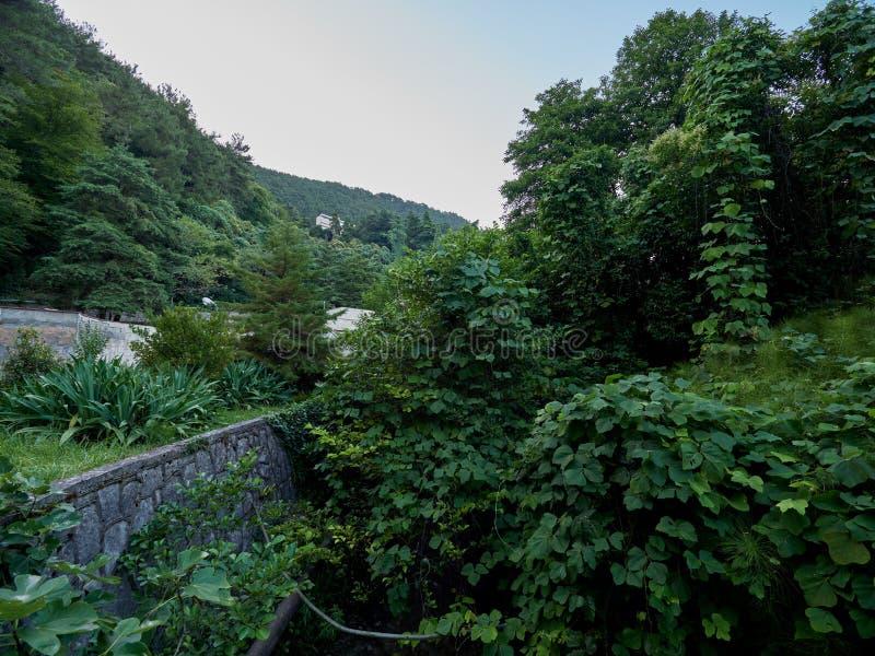 Oud verlaten groen park voor de berg stock foto