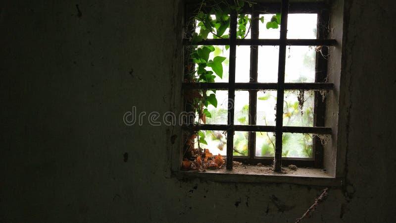 Oud verlaten venster met spinnewebben in een oud huis royalty-vrije stock afbeelding