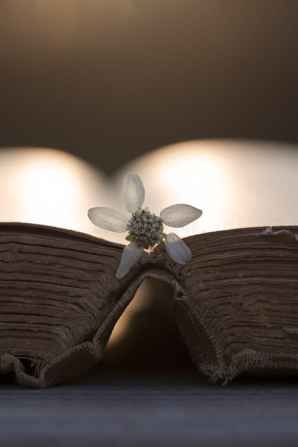 Oud Versleten Open Boek in het Zonlicht stock fotografie