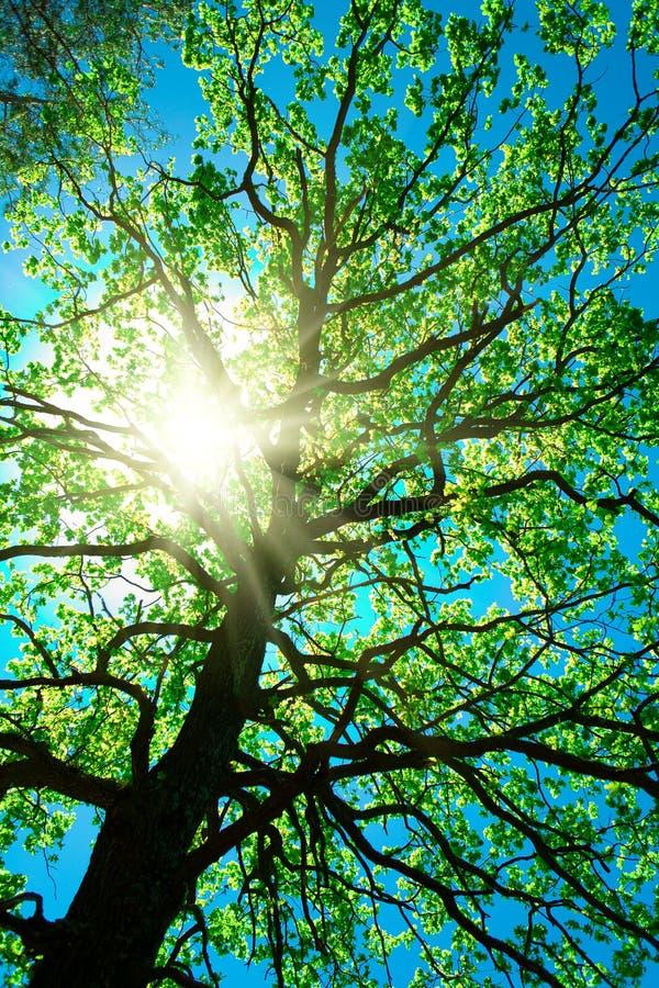Oud wijf van boom op een hemelsamenvatting royalty-vrije stock fotografie