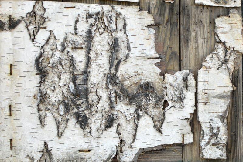 Oude afgebroken witte schorstextuur met nietjes op bruine houten planken royalty-vrije stock afbeeldingen