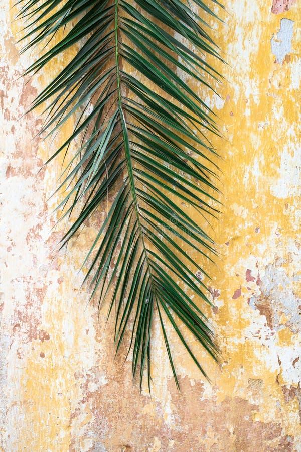 Oude antieke uitstekende historische muur en palmtak stock foto