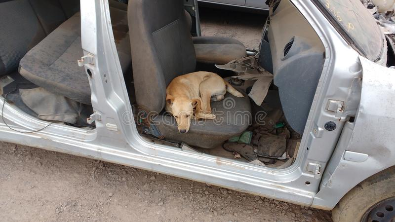 Oude auto en hond royalty-vrije stock fotografie