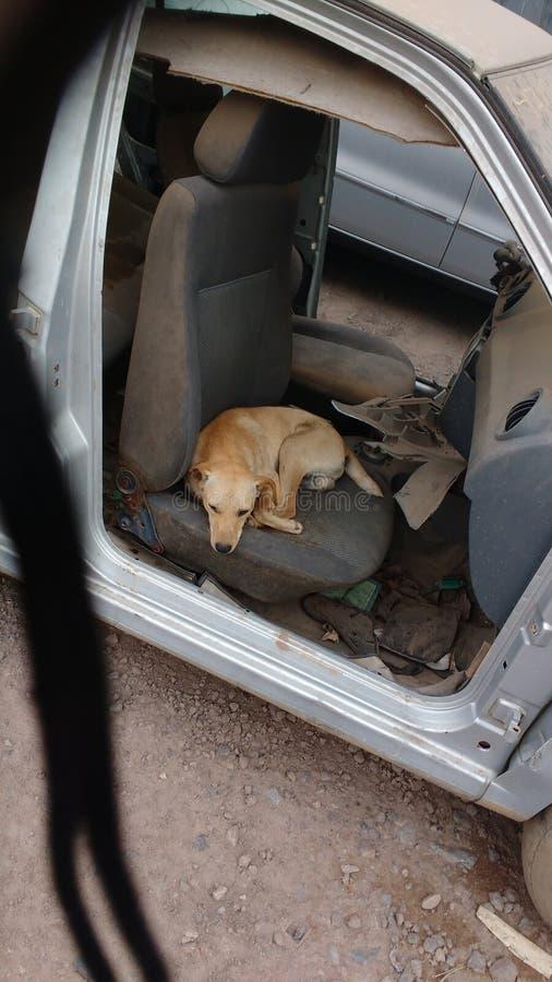 Oude auto en hond stock afbeeldingen
