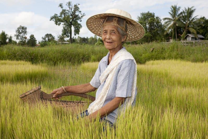 Oude Aziatische vrouw bij het padie-gebied stock afbeelding