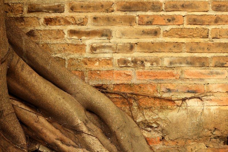 Oude bakstenen muur in het bos met de achtergrond van de wortelboom royalty-vrije stock foto's
