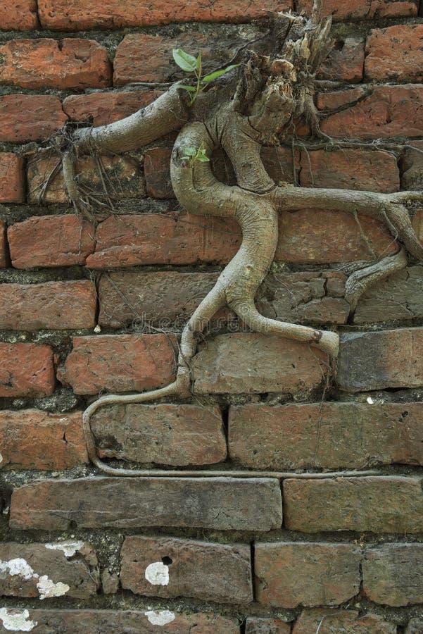 Oude bakstenen muur met boom royalty-vrije stock foto