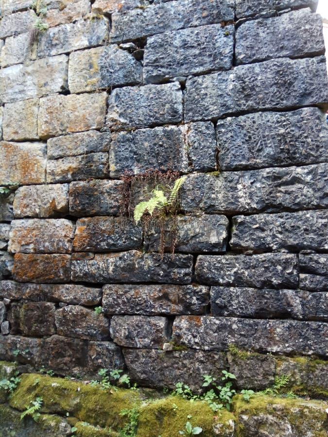 Oude bakstenen muur met een uiterst kleine groene installatie royalty-vrije stock foto