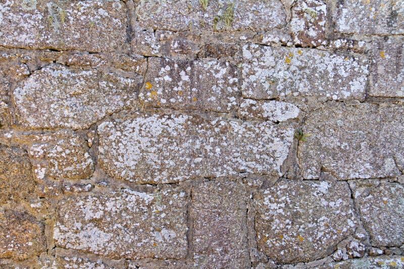 Oude bakstenen muurtextuur met korstmos stock fotografie