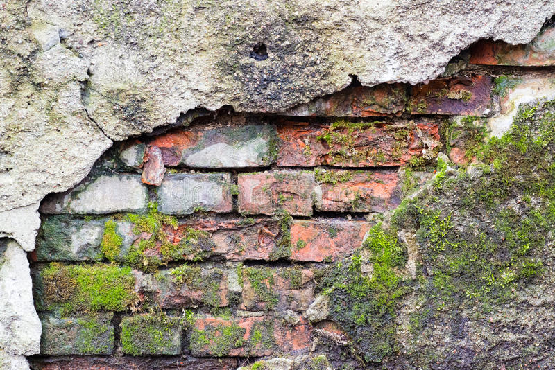 Oude bakstenen muurtextuur met mos stock afbeelding