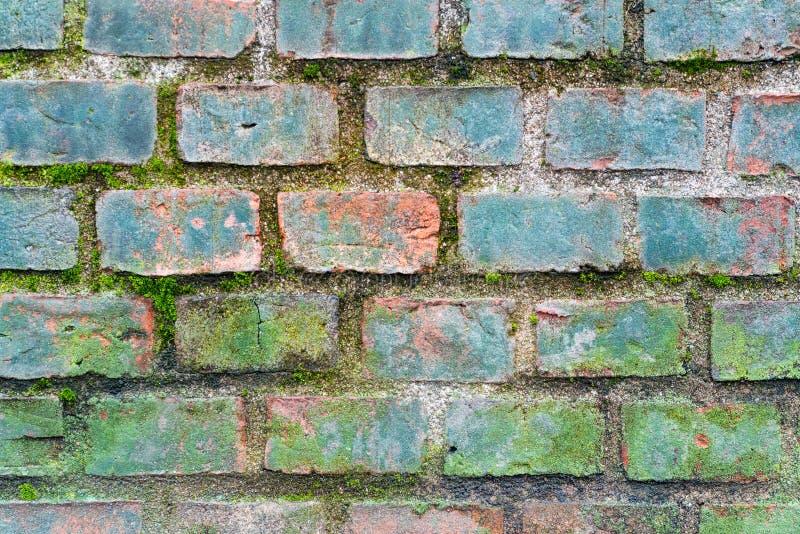 Oude bakstenen muurtextuur met mos stock afbeeldingen