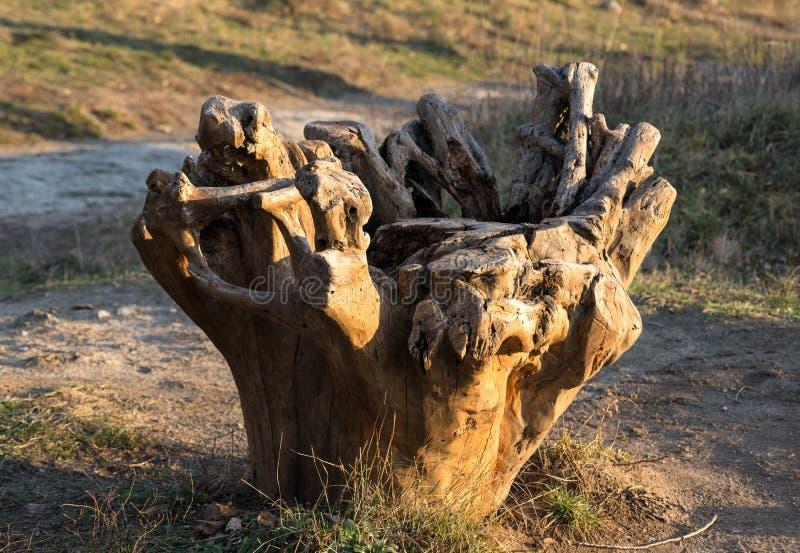 Oude bebouwde boom in het park royalty-vrije stock afbeeldingen
