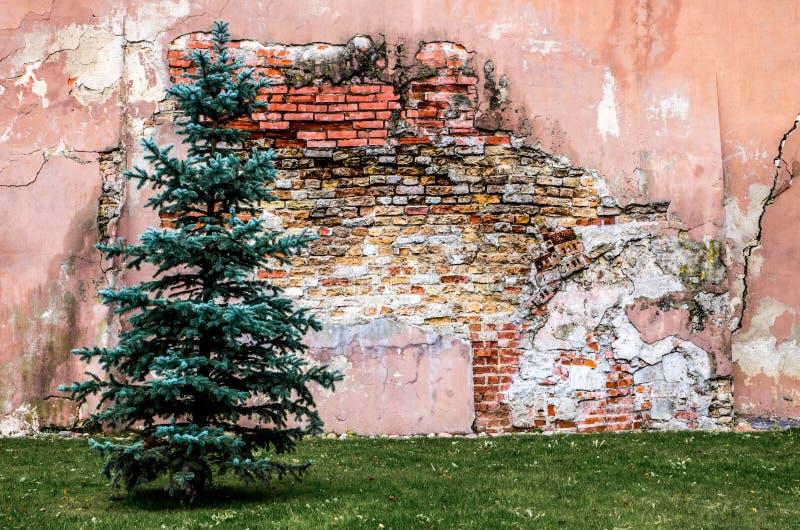 Oude beschadigde bakstenen muur en een boom royalty-vrije stock foto