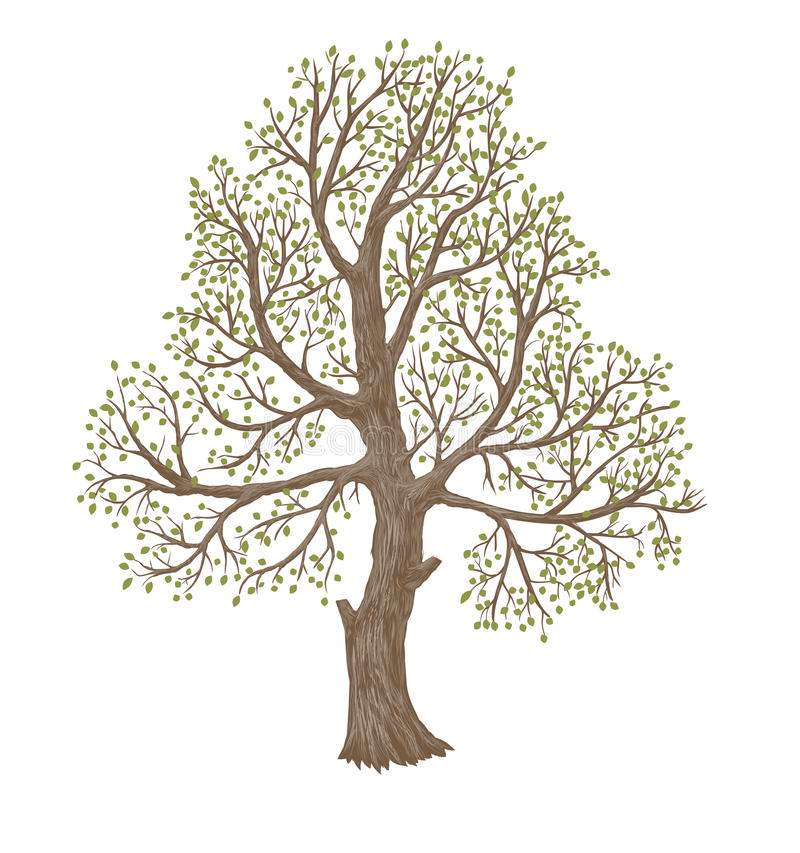 Oude boom stock illustratie