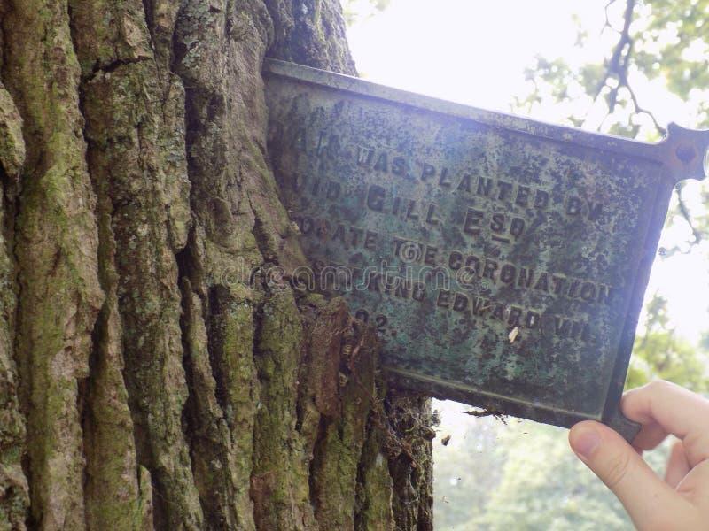 Oude boom stock fotografie
