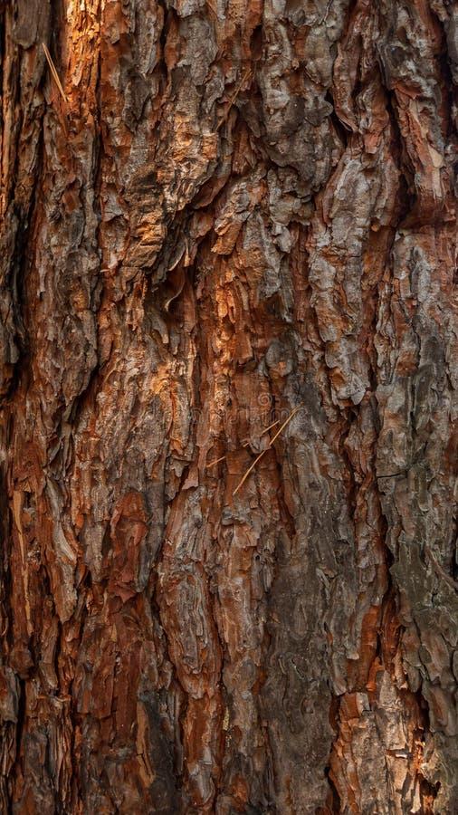 Oude boom als abstracte achtergrond royalty-vrije stock afbeelding